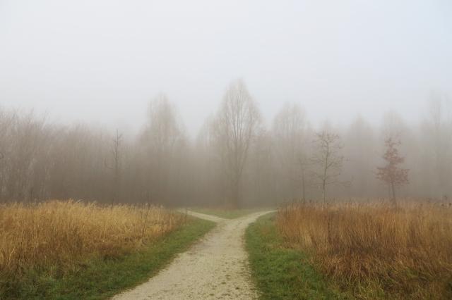 霧にかすんだ野原の分かれ道