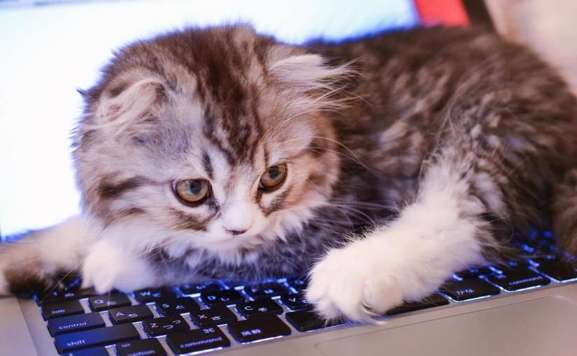 キーボードの上にいすわる猫