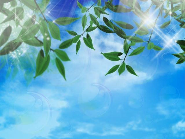 青空を背景にした葉っぱ