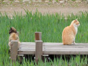 そっぽを向く二匹の猫