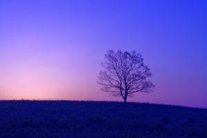 草原の霧に浮かぶ1本の樹木